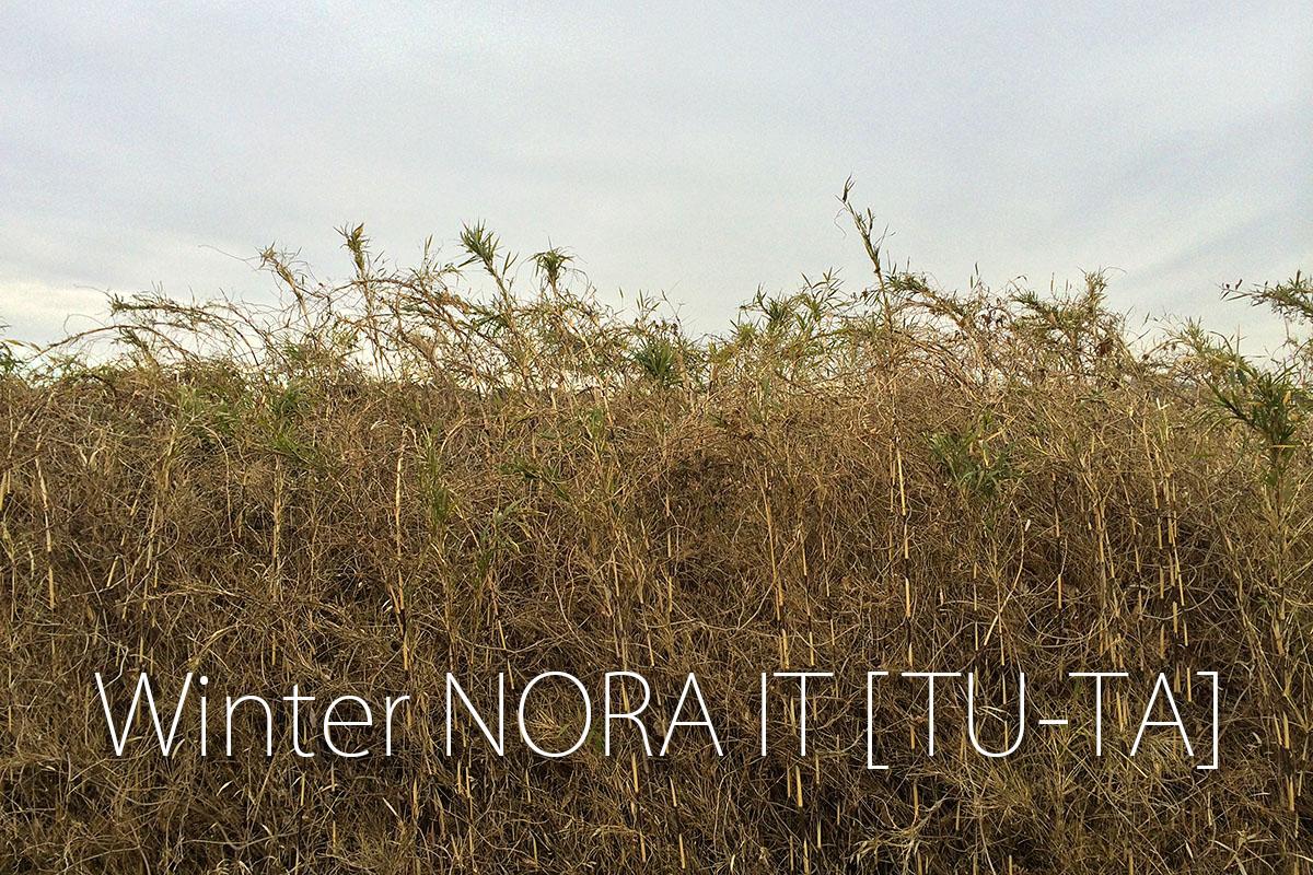 Winter NORA IT [TU-TA]