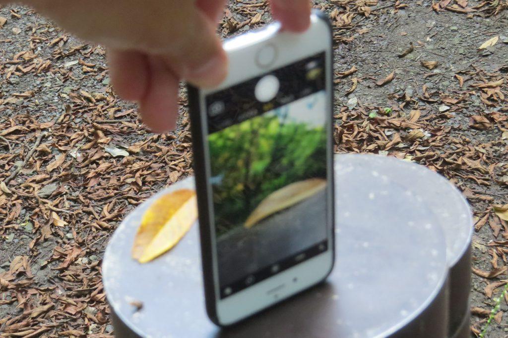 iPhone逆さ撮り実例落ち葉