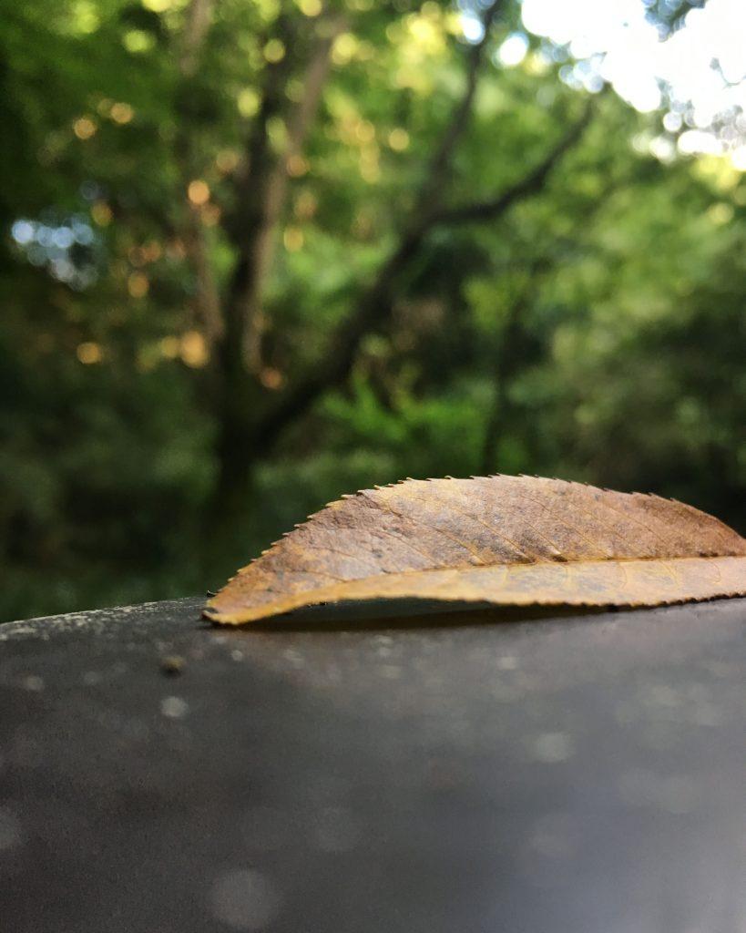 逆さ撮り落ち葉