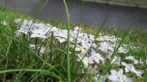 NORA ITスプリング到来2014白い花