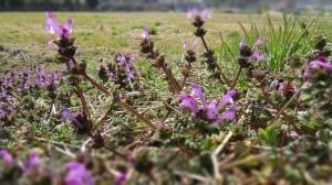 NORA ITスプリング到来2014紫の花