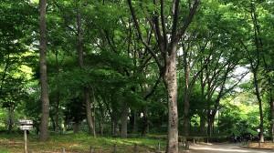 新宿中央公園の森