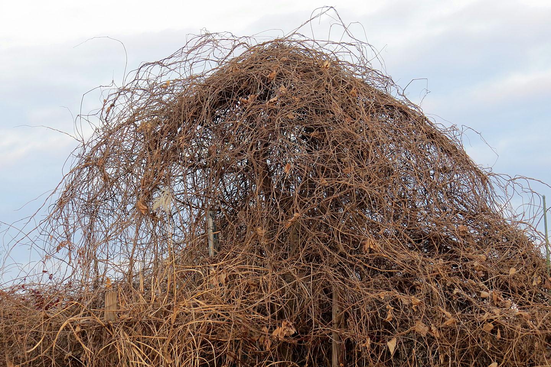 【蔦から伝わる野良IT】冬はTU-TAから創造性をツタえてもらおう