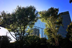 新宿中央公園からの景色