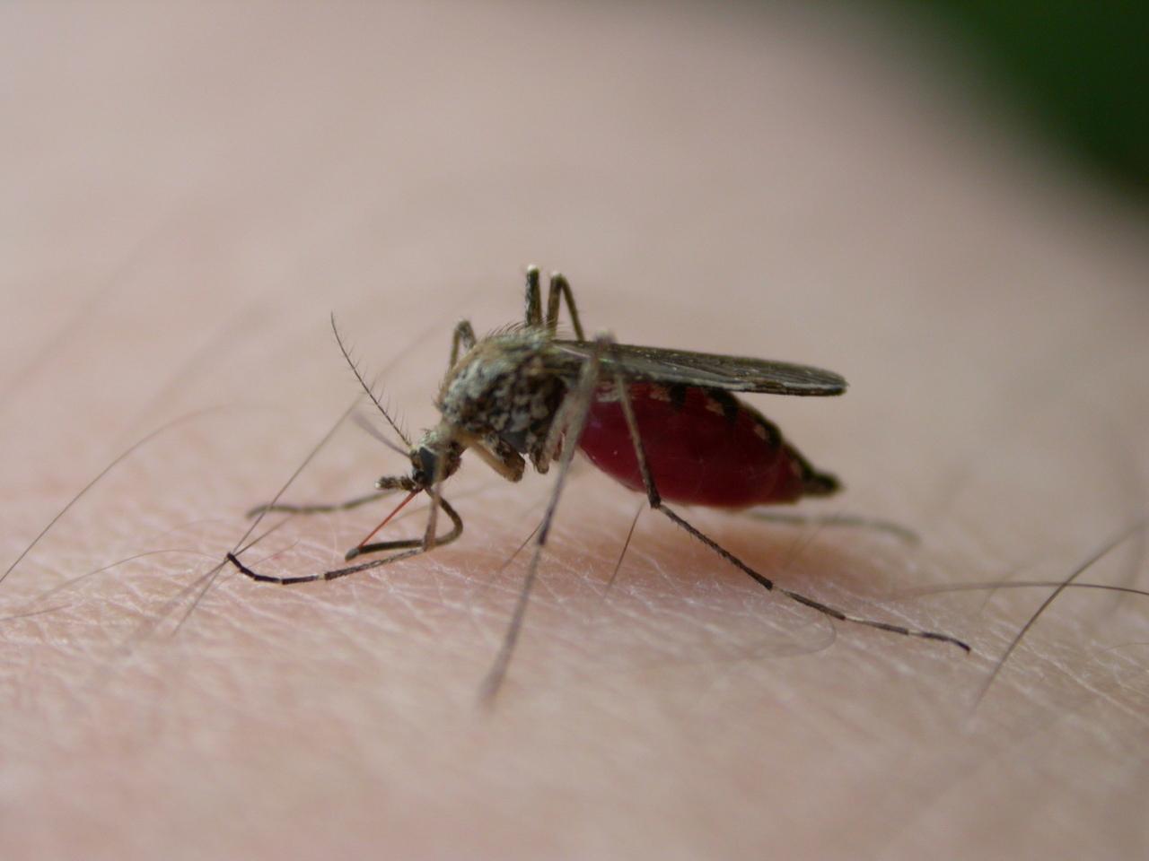 野良ITの夏場の敵、蚊
