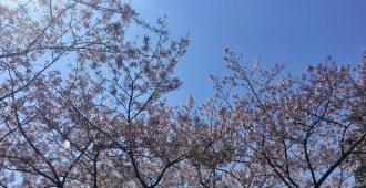やっぱり春は桜で花見で野良IT!でも実は桜より野草が野良ITにはマッチしていた!