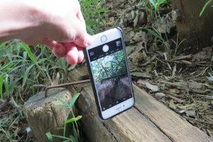 iPhone逆さ撮りイメージ